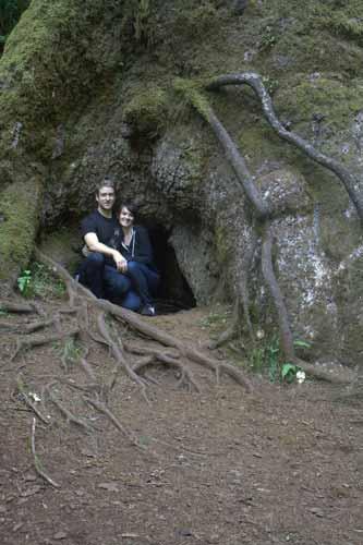 Oregon Coast Camping - Cape Perpetua - Giant Spruce